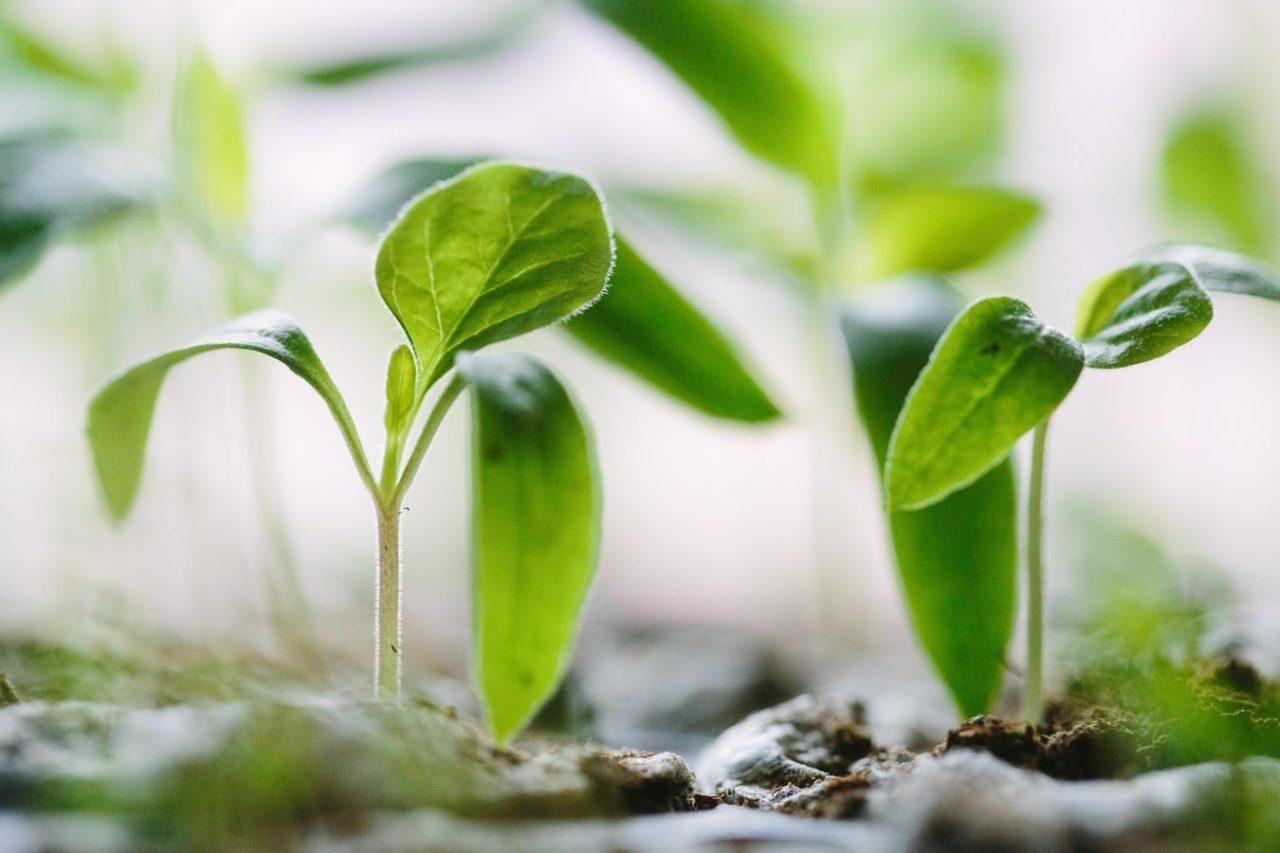 Два зеленых ростка как символ грантового творчества